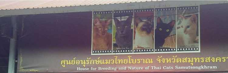 Cat Village-Amphawa Thailand